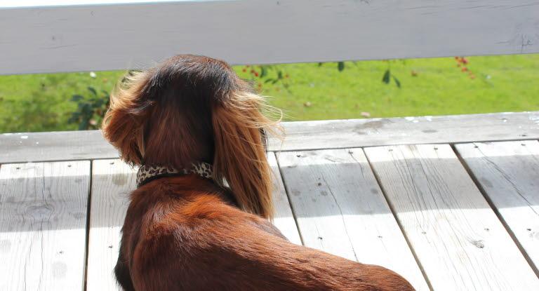 Hund Slickar I Rumpan