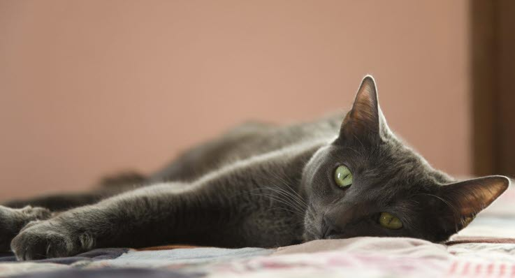 kastrera katt ålder
